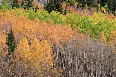 Aspen, Red Mountain Pass, Hwy 550