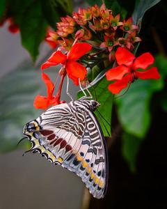 Westminster Butterfly Pavillion